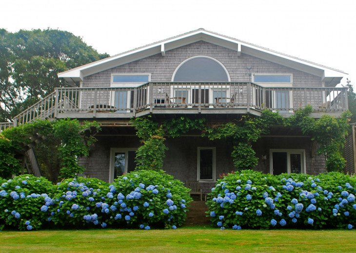 House draped in wisteria and surrounded by hydrangeas